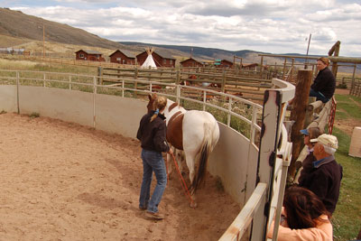Demonstration of natural horsemanship training at LRR.